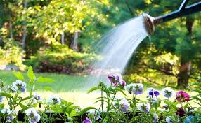 Top 8 tips to save water while gardening