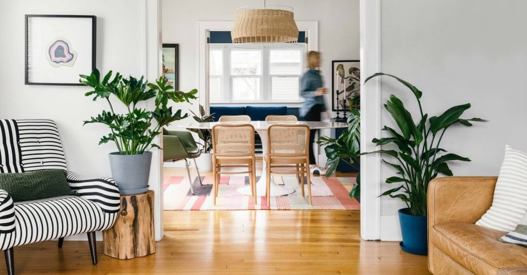 natural plants for living room colour