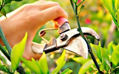 All you need to know about pruning your plants!
