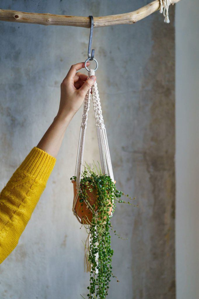 Woman holding macrame plant hanger with houseplant Peperomia over grey wall. Hobbies, love plants
